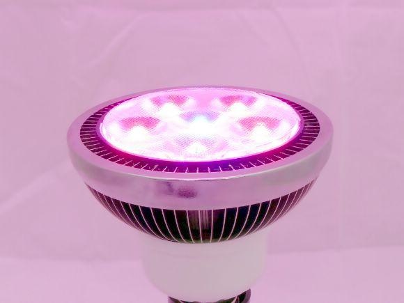 高功率High-power  LED Plant Grow Lights 10W植物燈(5R:1B)